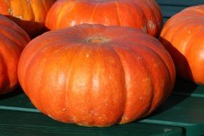 Get Your PumpkinFix